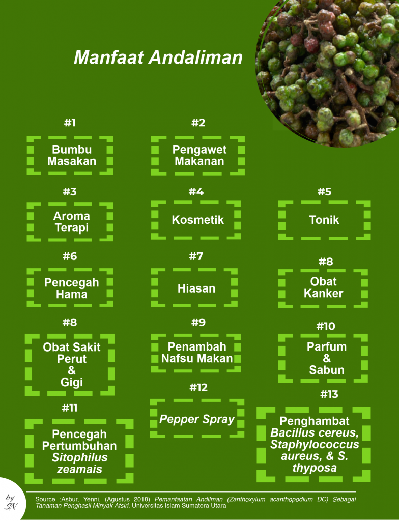 Infografik Manfaat Andaliman - image: sarinovita.com